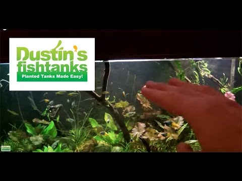 how-to-aquascape-with-open-space