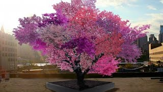 Wonderful Trees That Prove Nature Is Capable Of Amazing Things HD 2015 HD
