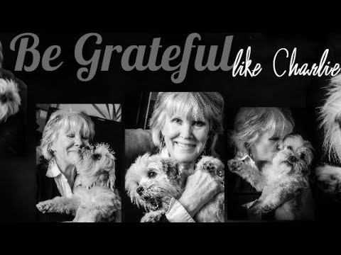 The Dog Connection ShowSeason 2, Episode 7Meet Charlie Tarochione