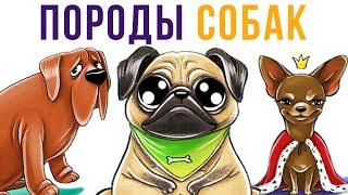 Комиксы. Породы собак | Мемозг #338