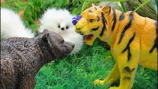 ССОРА ТИГРА и МЕДВЕДЯ. Как помирить друзей? Мультфильмы про животных для детей. 1 СЕРИЯ