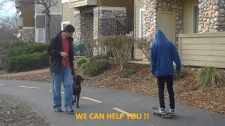 Mydoggieden.com Sacramento Dog Training Before And After K9 Behavior Specialist (916)969-2473