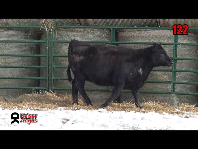 Kaiser Angus Ranch Lot 122