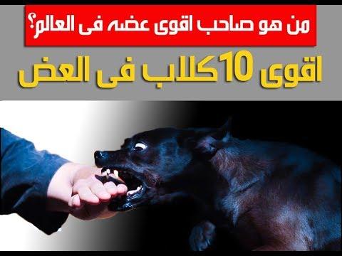 افضل 10 كلاب فى قوه العض بالأرقام  -  TOP 10 DOGS WITH STRONGEST BITE FORCE
