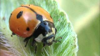 Colorado Kids Act as Citizen Scientists in National Lady Bug Hunt