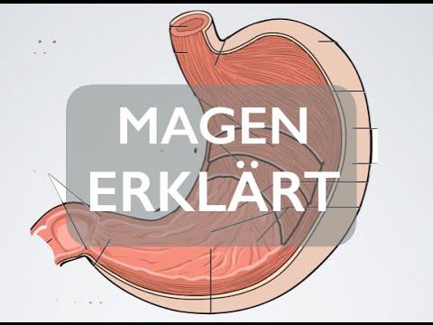 Magen - Organ | Medizin Grundlagen - YouTube
