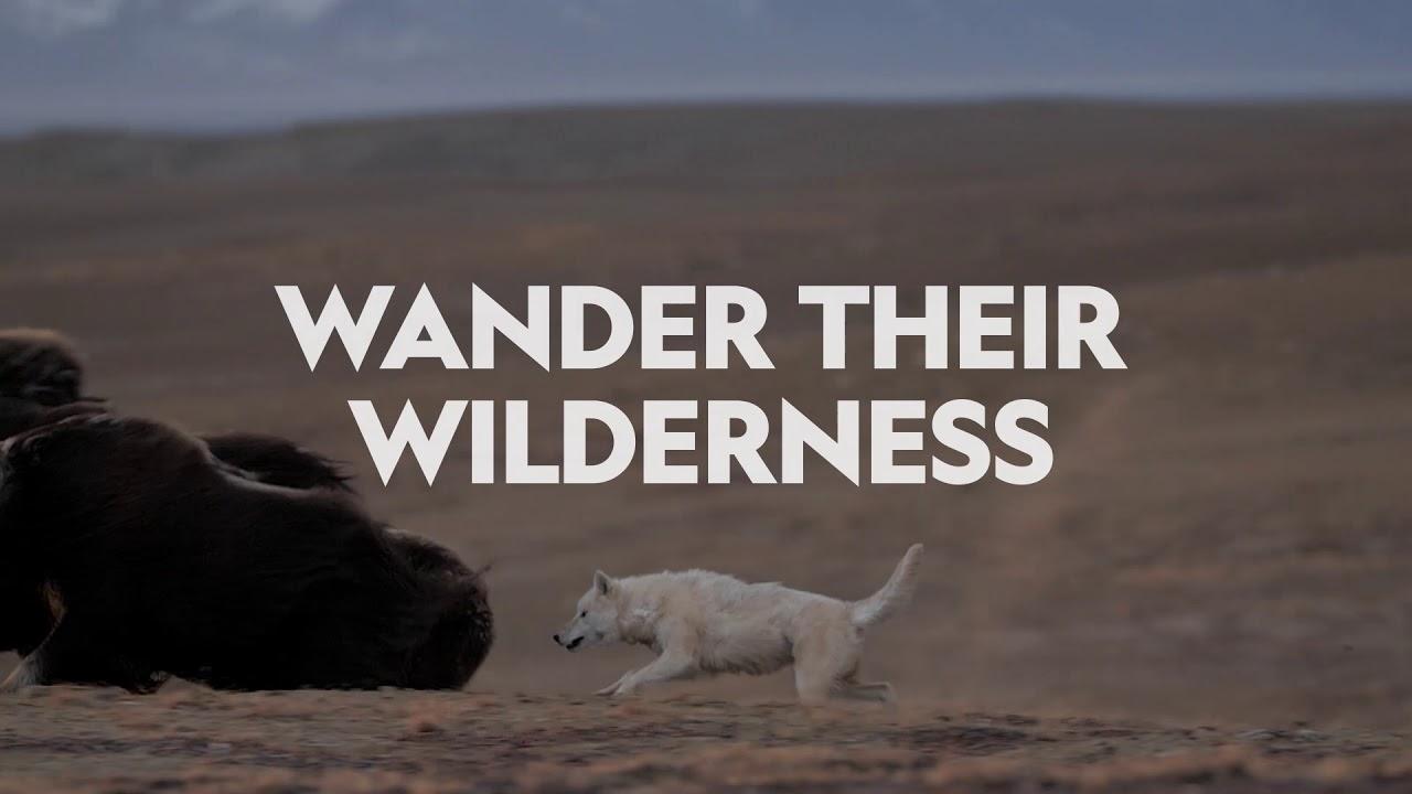 Download Kingdom Of The White Wolf   Nat Geo Wild