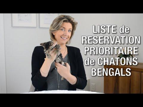 Liste De Réservation Prioritaire Pour L'achat D'un Chaton Bengal - Chatterie Bengal Laurentides