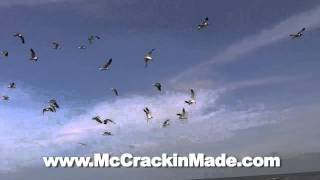 Seagulls Flying at the Beach Galveston Texas