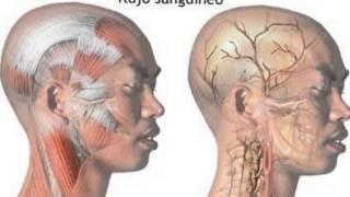 ¿Qué es la cefalea tensional? Síntomas y tratamientos para la cefalea