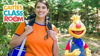 Tobee Goes Camping | A Caİtie and Tobee Adventure | Camping for Kids