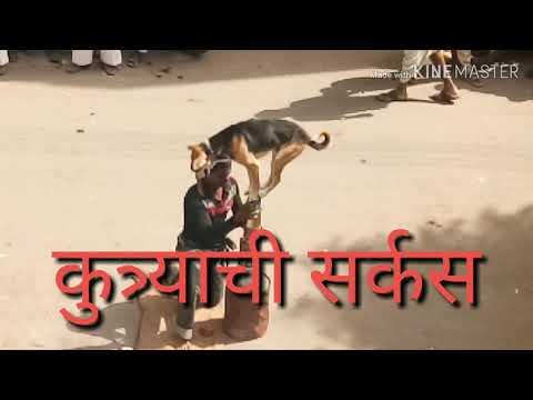 कुत्र्याची सर्कस Dog Circus