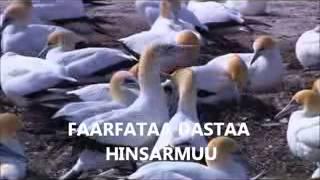 DASTA HINSARMU. OROMO GOSPEL SONG 2013