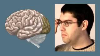 Головной мозг.mov