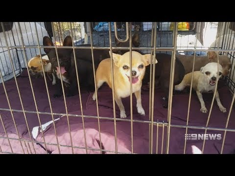 Puppy Farm | 9 News Perth
