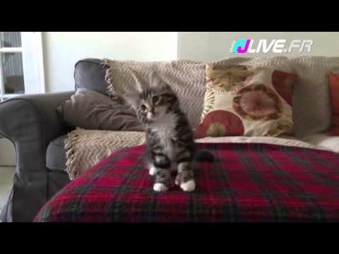Ce chat danse sur Uptown Funk