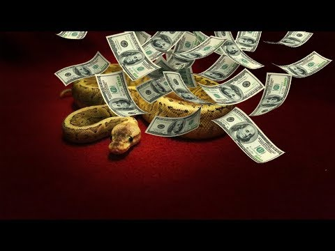 BUYING A HEALTHY BALL PYTHON: How I Purchase My Snakes Safely