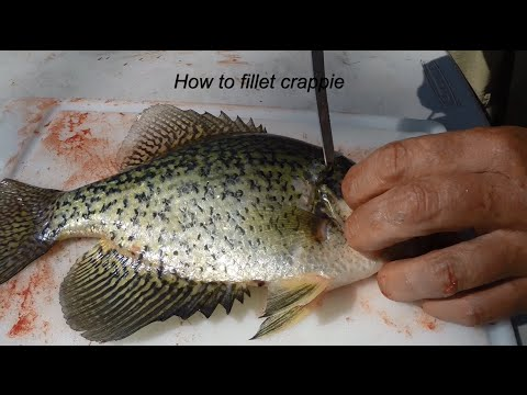 How To Fillet Crappie Like A Professional