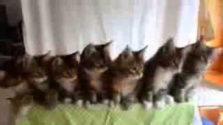 Классные котята !!!