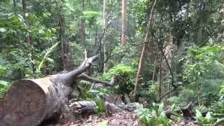 Bukit Timah Nature Reserve, Singapore, HD Experience