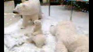 Polar bears in Joker Centar Split