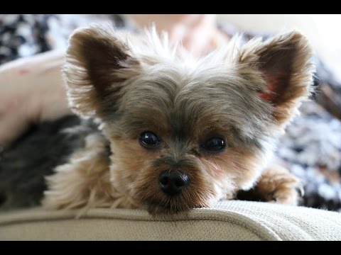 Pet Friendly Assisted Living Facilities and Nursing Homes