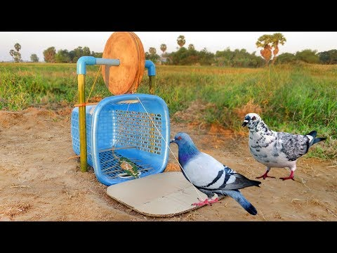 Easy Bird Trap - Simple DIY Creative Bird Trap make from water Wood and Basket That Work 100%