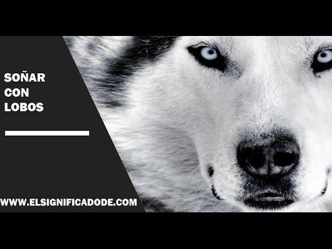 Significado De Soñar Con Lobos Qué Significa Soñar Con Lobos