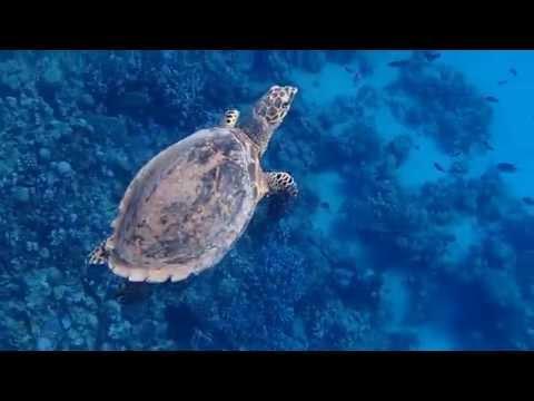 черепаха дышит