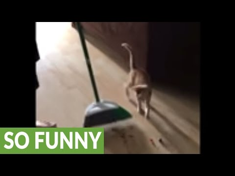 Kitten just wants to 'help' clean the house