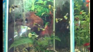Аквариумные рыбки в зоомагазине Немо, г.Камышин(I created this video with the YouTube Video Editor (http://www.youtube.com/editor), 2012-10-08T17:16:18.000Z)
