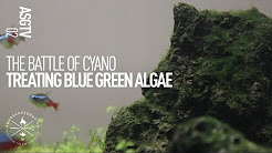 How to Kill Cyanobacteria In A Planted Tank