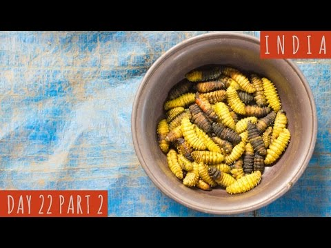 Eating Dog Meat and Silk Worm | DAY 22 Part 2