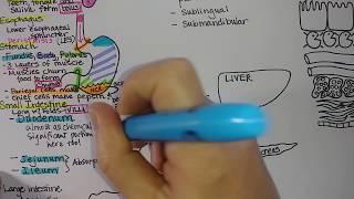 Digestive System | Summary