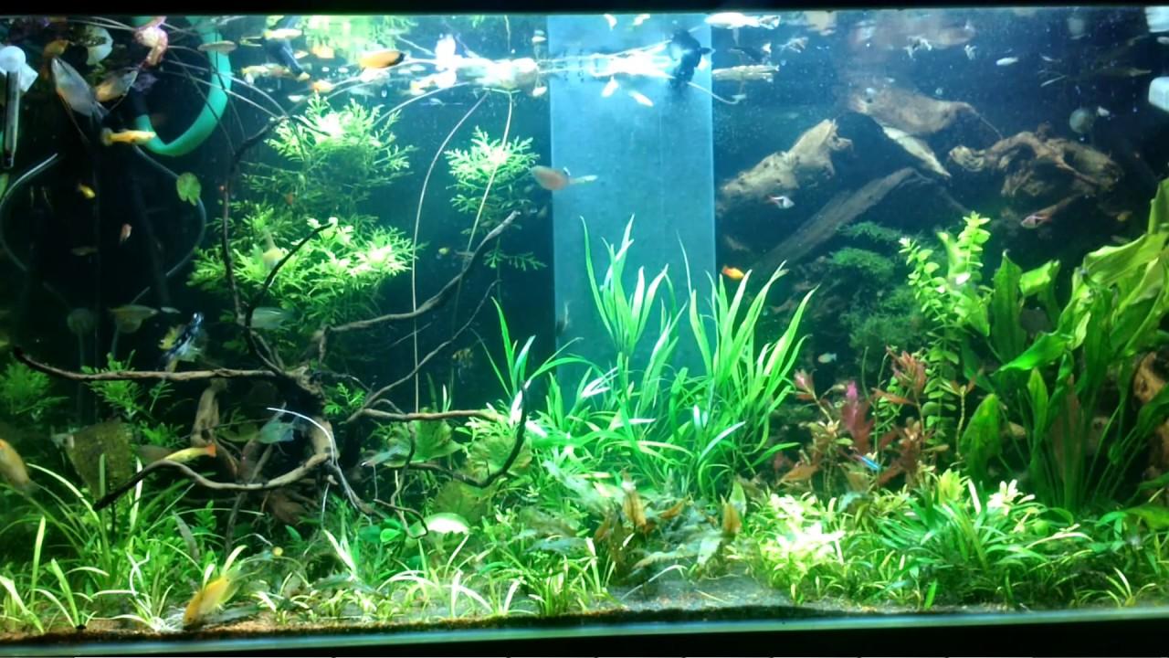 Tropical Fish Tank Aquarium For Wallpaper Engine Links