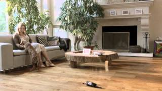 Родезийские риджбеки в рекламе Pro Plan.