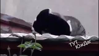 Прикол про котов без мата