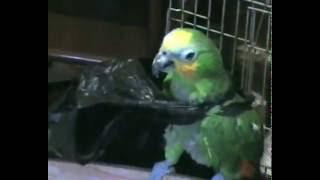 Прикол: попугай с пакетом
