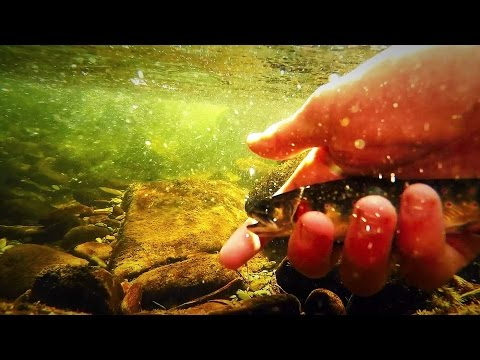 Great Smoky Mountain Native Brook Trout Fly Fishing (Lynn Camp Prong)