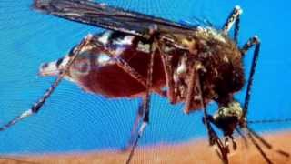 """breaking Yellow Fever California From Mosquitoes"" Last Days Plagues"