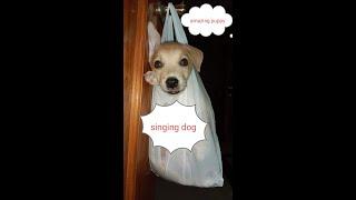 The singing dog