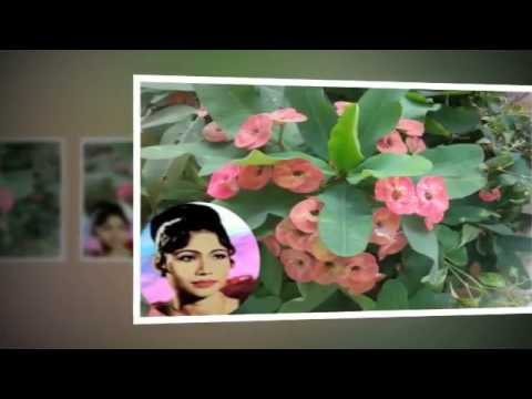 Ros sereysothea | Bong Kleat Chhngay Tov | Khmer Old Song | Cambodia Music MP3  2015 music mp3