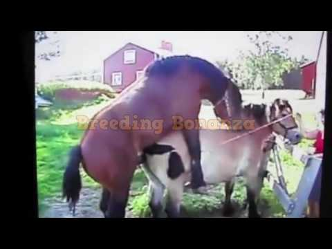 Breeding and Mating for educational purposes 8 thumbnail