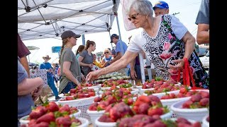 Visit Sumner County - Middle Tennessee Strawberry Festival