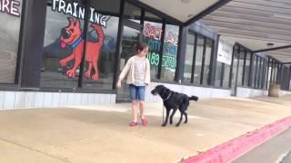 Training A Dog With An E-collar