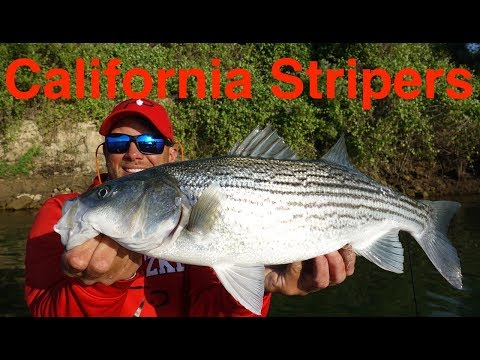 California Striper Fishing