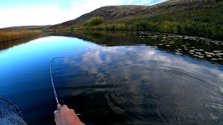 В ЭТИХ ЛУЖАХ ЖИВУТ ЩУКИ МОНСТРЫ Рыбалка в чистейшей воде Попал на ЖОР Думал такого не бывает