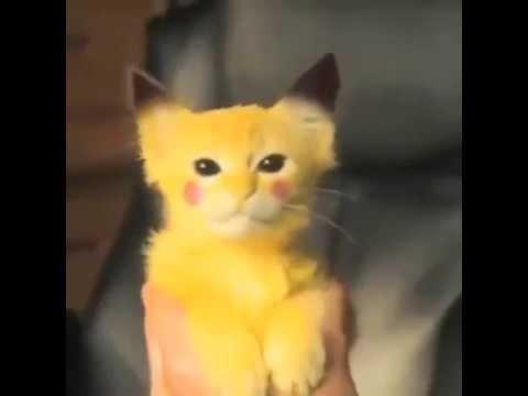 Pikaçu Kedi:)))