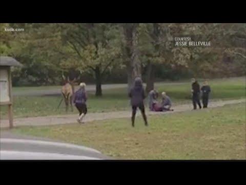Download Elk attacks woman at Lone Elk Park