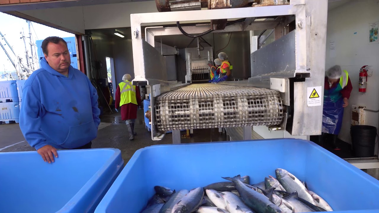 Quatsino Food Fish Documentary